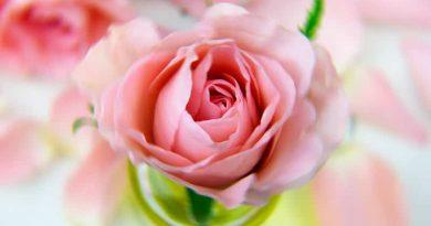 tienda-on-line-flores